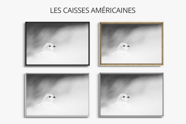 Photo-le-casanier-caisse-americaine