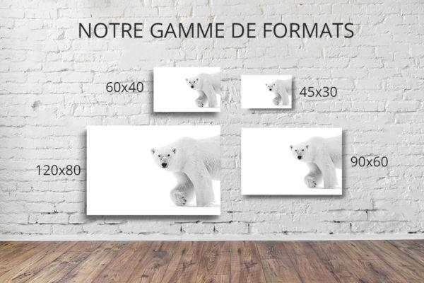 Photo-montreurs-dours-formats-deco