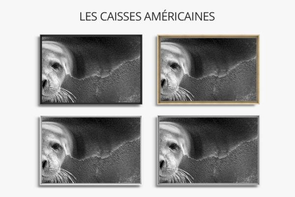 Photo-oh-les-belles-bacchantes-caisse-americaine