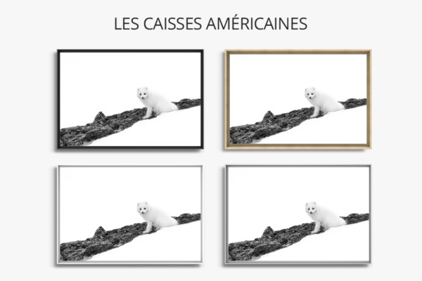 Photo-sport-dhiver-caisse-americaine