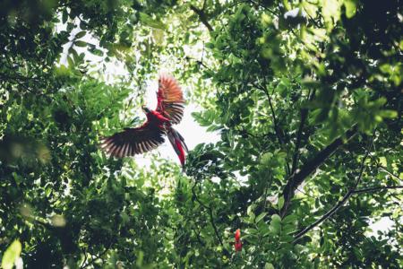 Photo-aras-rouge-bestjobers-3-2_120-180