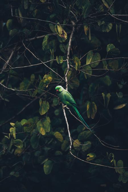 Photo-elegance-tropicale-bestjobers-3-2-120-180