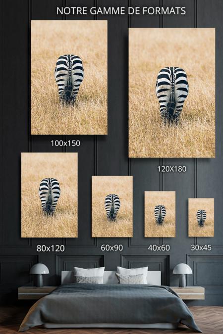 Photo-zebre-formats-deco